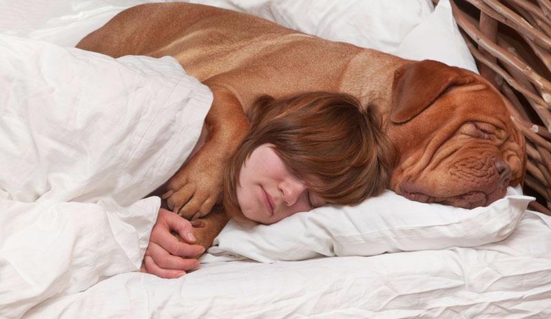 Darf Euer Hund Ins Bett