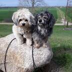 Wir lieben große Steine zum Klettern