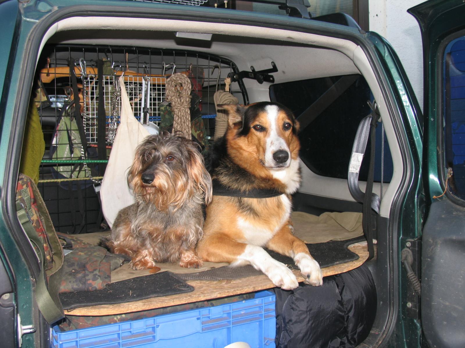 Das Hundeforum