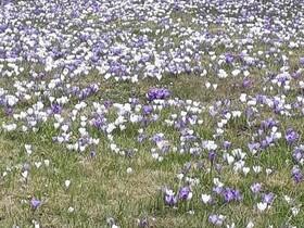 So sieht der Frühling aus