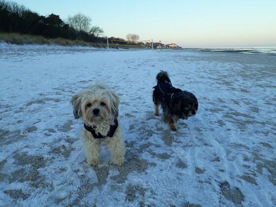 Weit und breit- kein Mensch.......da kann man stundenlang stressfrei am Strand spazieren