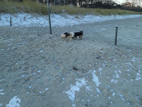 Hundestrandende-aber nicht im Winter *freu*